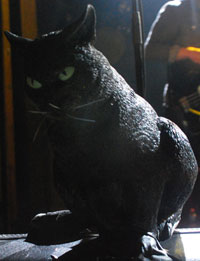 A Cat Formidable