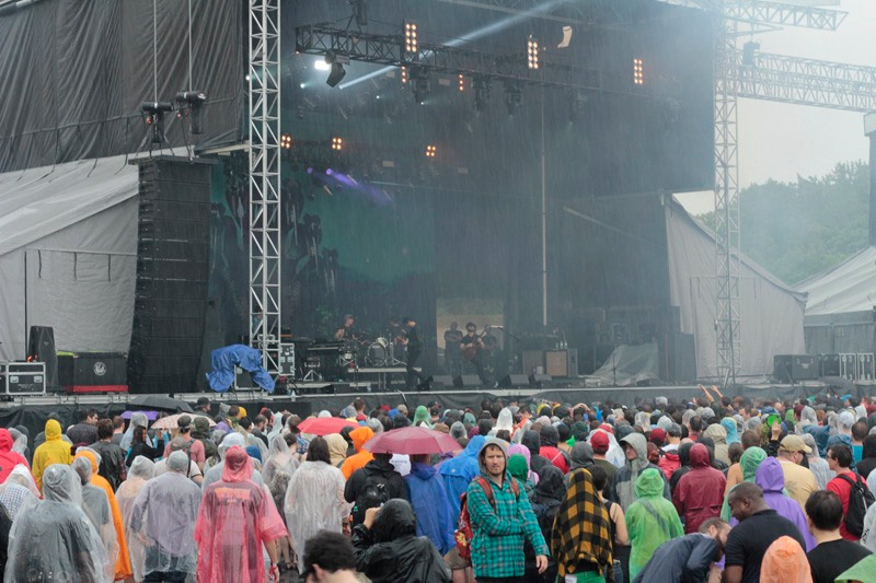 Foals in the rain
