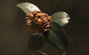 St. Paul & The Broken Bones : Young Sick Camellia